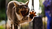 можно ли заразиться вич от кошки