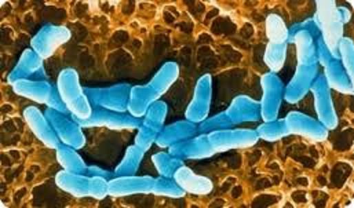 анализы обнаружение паразитов в организме