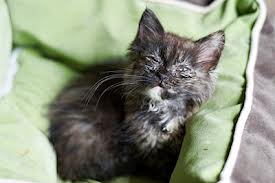 как лечить простатит у кота