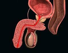 5 нок от простатита отзывы - Таблетки Нолицин инструкция